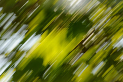 Rica Belna art, abstract, photography, green foliage
